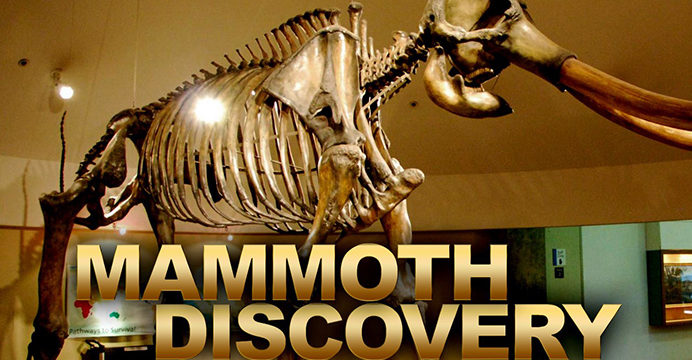 mammoth_discovery